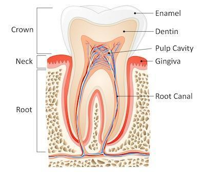 root canal in kingsport tn